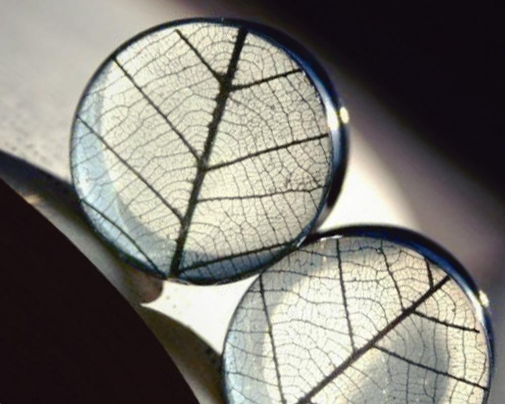 Обработка растений для заливки эпоксидной смолой фото 2
