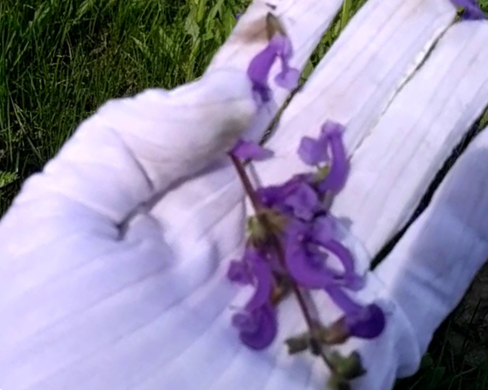 Способы подготовки растений для заливки эпоксидной смолой фото 3
