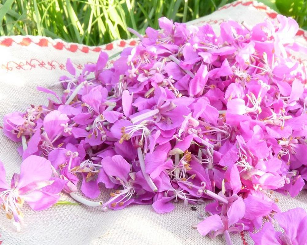Способы подготовки растений для заливки эпоксидной смолой фото 4