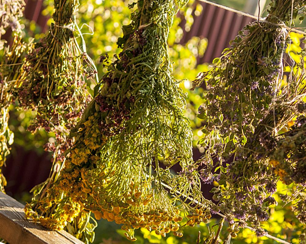 Способы подготовки растений для заливки эпоксидной смолой фото 5
