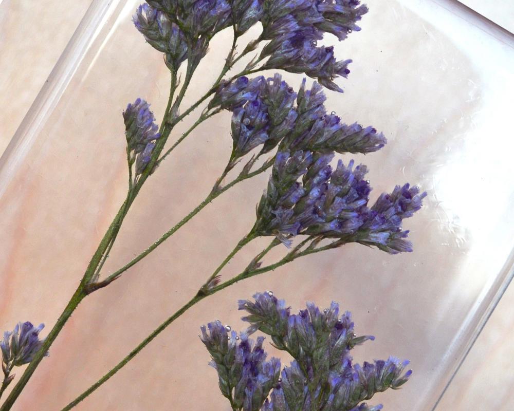 Обработка растений для заливки эпоксидной смолой фото 6
