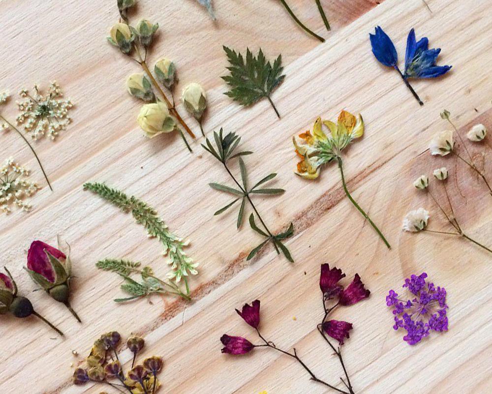 Обработка растений для заливки эпоксидной смолой фото 7
