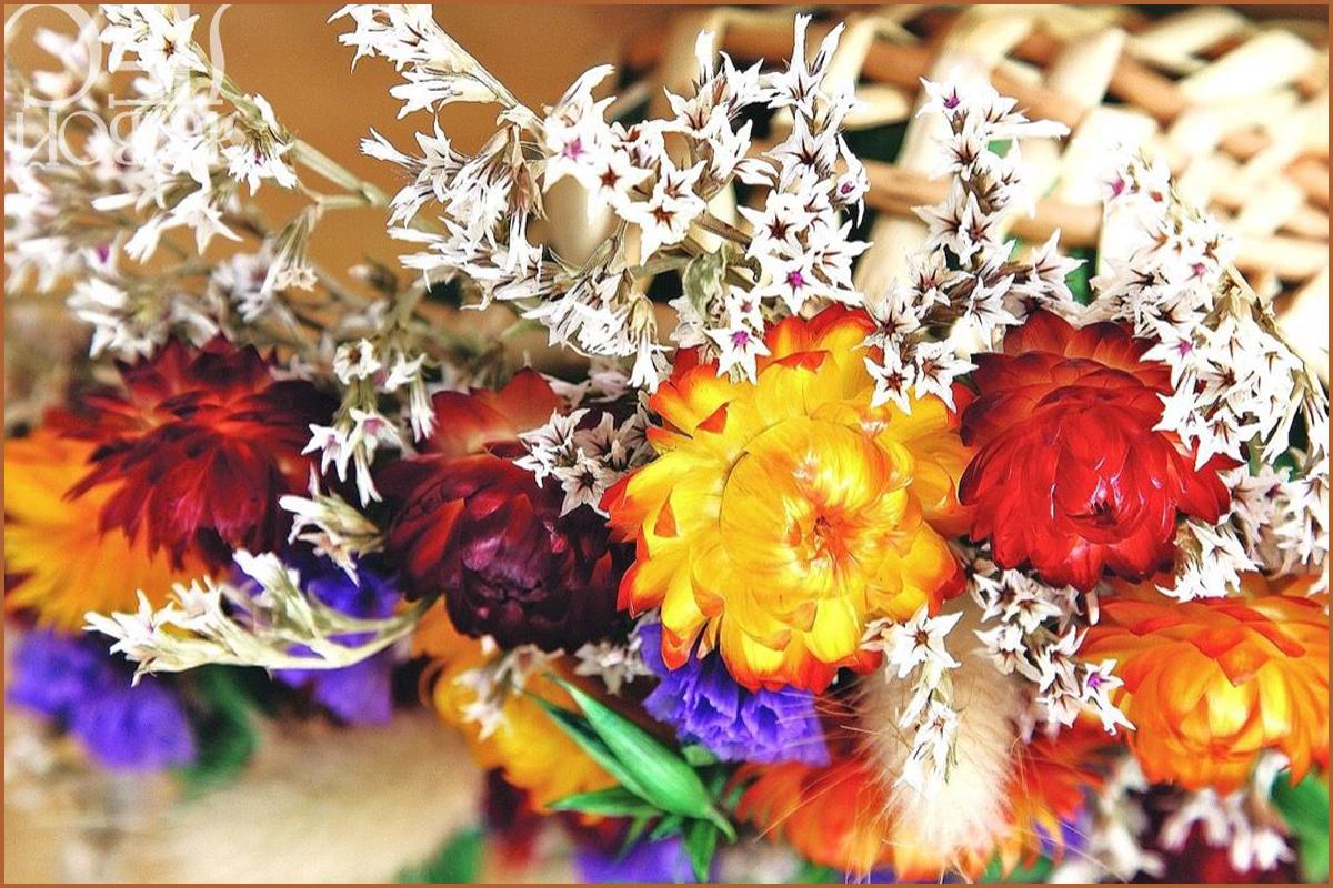 Сухоцветы своими руками и композиции из них